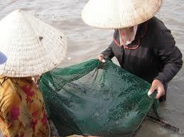 bắt cá nâu