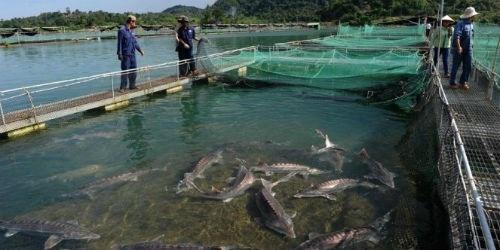 Lâm Đồng: Cá nước lạnh trở thành sản phẩm đặc thù