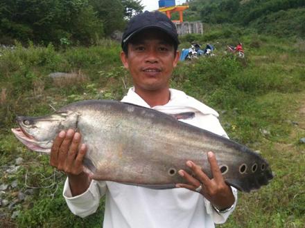 Cá thác lác nặng 7kg ở hồ thủy điện Quảng Nam