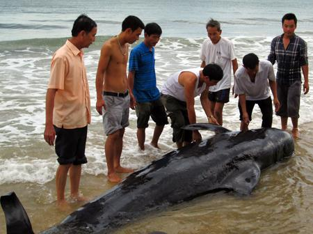 Xác con cá voi ở bờ biển New Zealand. Ảnh: LiveScience.