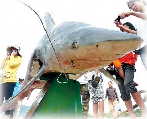 Nghề câu cá mập xưa và nay ở Phú Quý