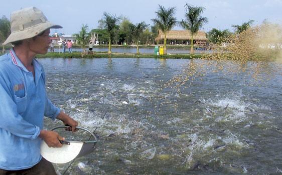 Tình trạng sốc trên cá và những giải pháp