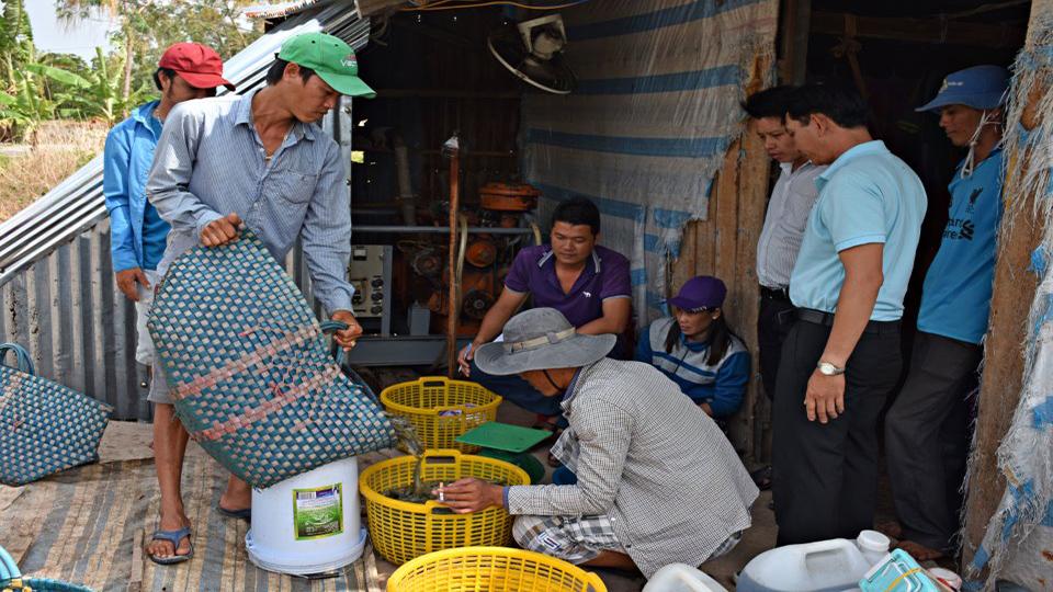 Đột phá chuỗi liên kết nông dân và doanh nghiệp