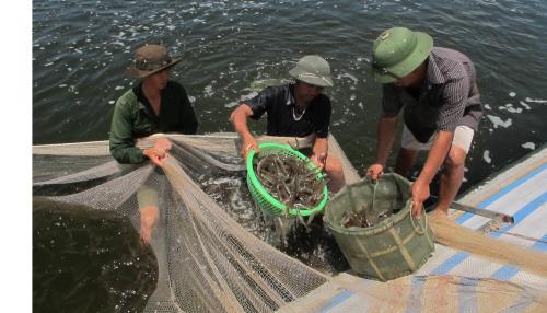 Công nghệ mới cải thiện nước nuôi trồng thủy sản