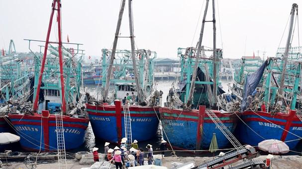 Biển động, nhiều tàu cá nằm bờ