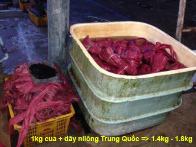 3 du khách Trung Quốc bị xử phạt vì đi thu mua tôm, cua