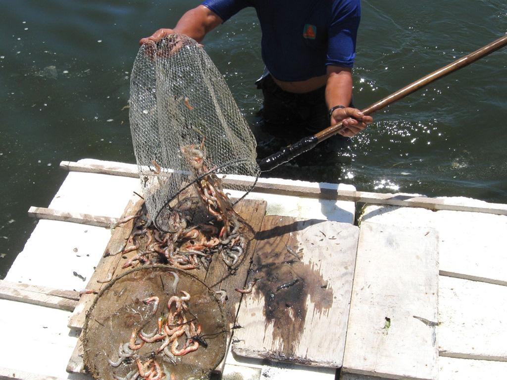 Kinh phí phòng, chống dịch bệnh thủy sản