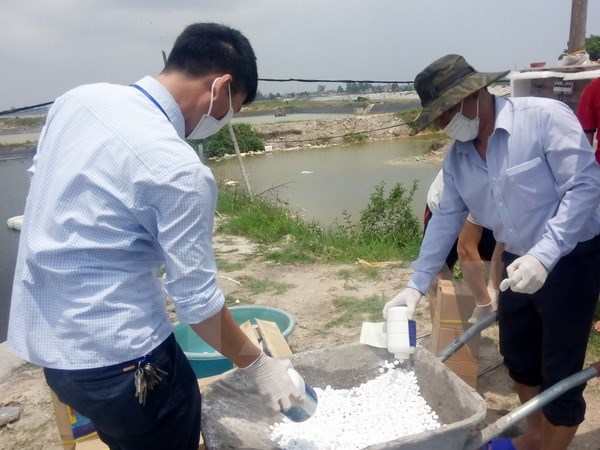 Quảng Ninh: Xuất hiện virus đốm trắng, bệnh gan tụy trên tôm nuôi