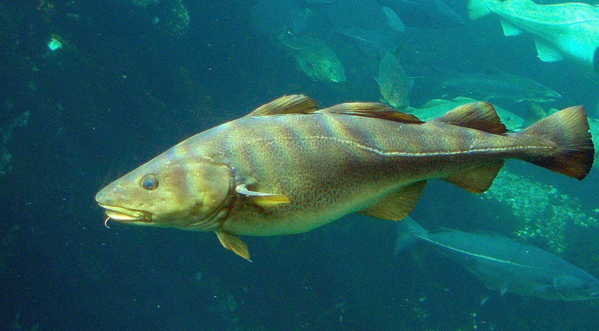 Ảnh hưởng của độ sâu đến sự tiến hóa của gen Hemoglobin của cá
