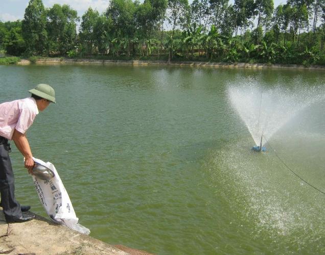 cách gây màu nước trong nuôi tôm