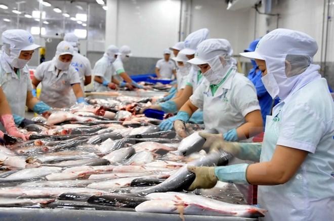 Thị trường cá tra giống 'hạ nhiệt' trong khi giá tôm lại tăng