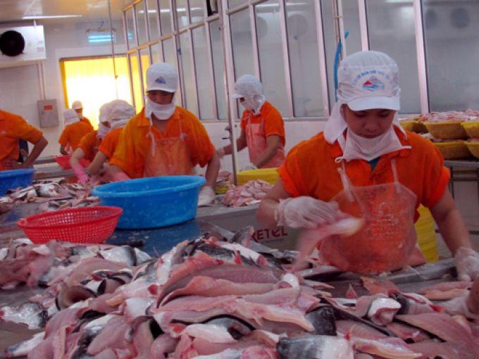 Giá cá tra xuất sang Mỹ vị dội lên sau khi Mỹ kiểm tra 100% lô hàng