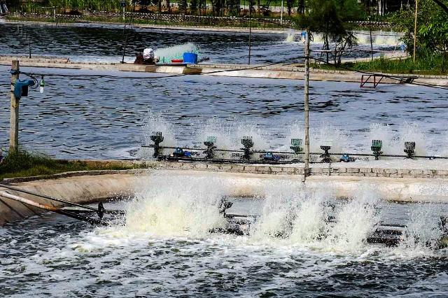 Nghệ An: Tập huấn đo đạc chỉ tiêu môi trường nuôi thủy sản