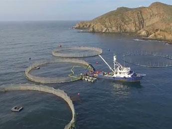 Giải pháp mới đột phá trong thức ăn cho cá ngừ