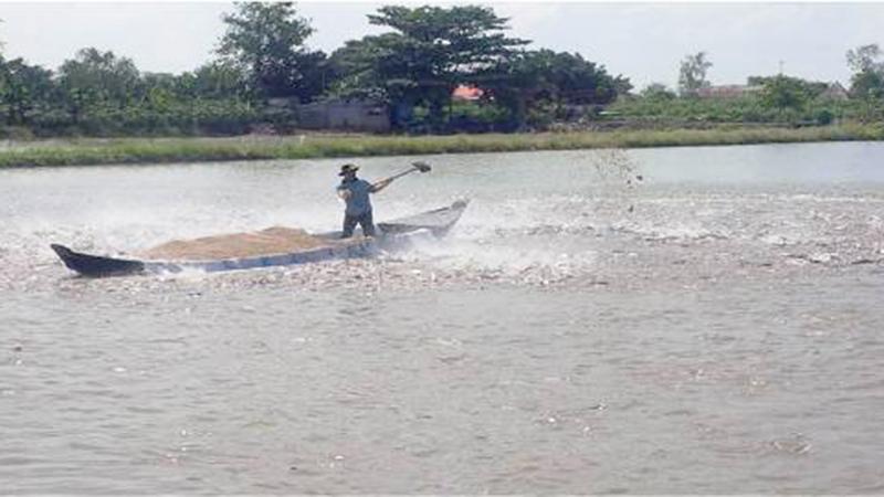Thời tiết bất lợi người nuôi cá tra thiệt hại hàng chục tỷ đồng