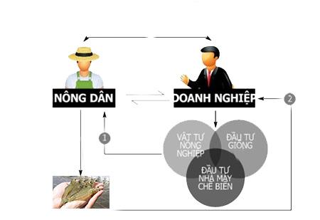 Đạt mục tiêu xuất khẩu:Hóa giải mâu thuẫn nông dân, doanh nghiệp
