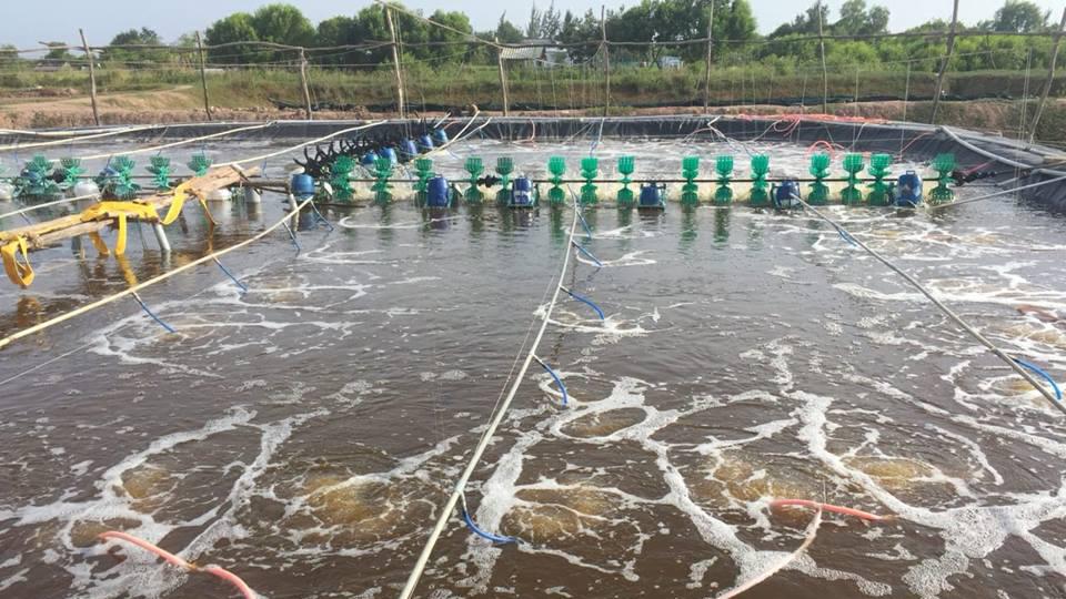 Nghệ An: Một năm nhìn lại kết quả nuôi trồng thủy sản