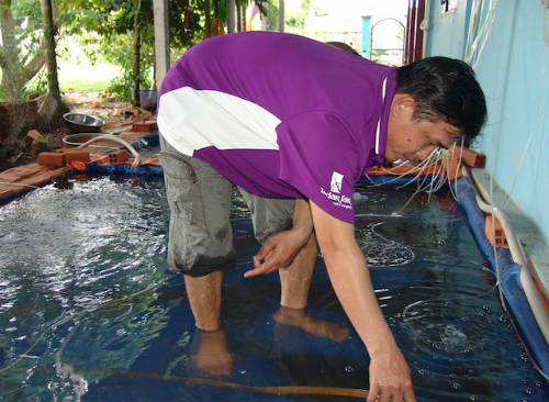 Anh Nguyễn Hồng Nghĩa đang chăm sóc mẻ cá trê vàng giống sắp xuất bán.