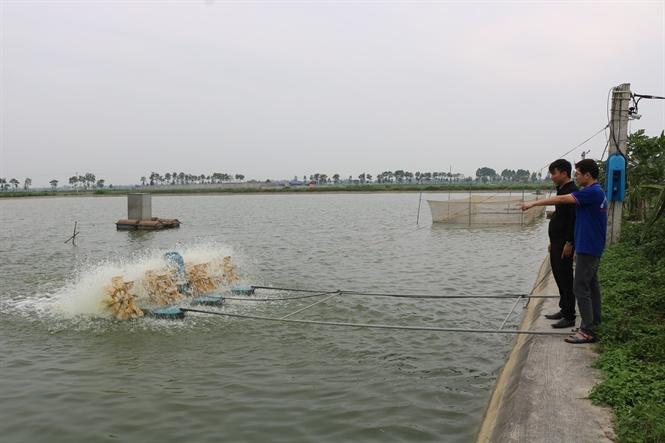 Kỹ thuật nuôi cá ao nổi