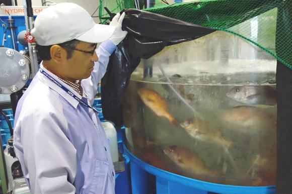 Nuôi cá trong hệ thống tuần hoàn ở Nhật Bản