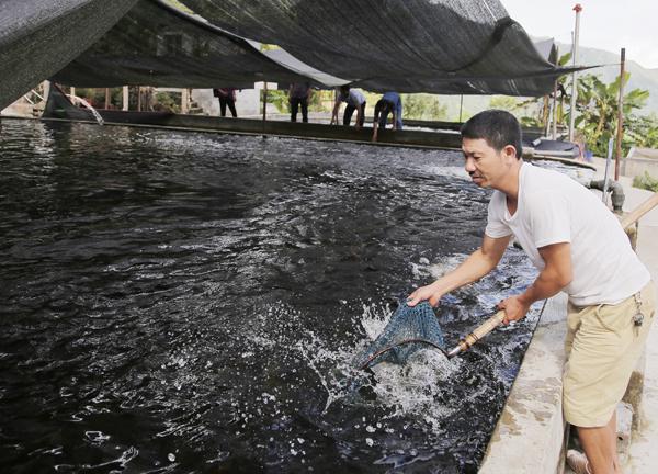 Nuôi cá nước lạnh hiệu quả cao ở Bát Xát