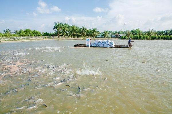 Cần Thơ có 200,76 ha diện tích nuôi trồng thủy sản đạt chuẩn