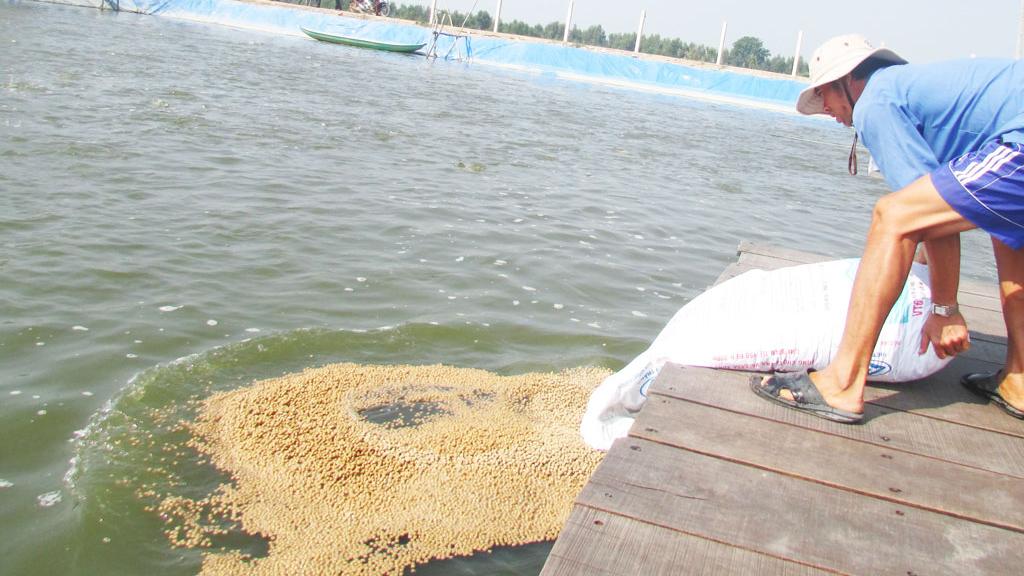 Nông dân thận trọng khi ươm cá tra bột