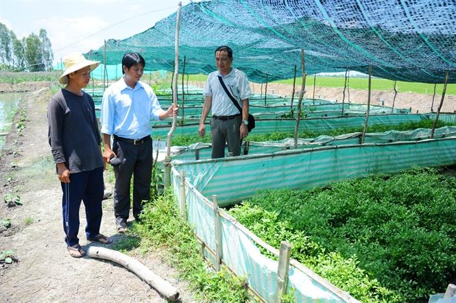 Nuôi lươn không bùn kết hợp trồng rau thủy canh