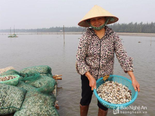 Nông dân xã Quỳnh Thọ (Quỳnh Lưu) tiến hành thả ngao giống tại bãi triều.