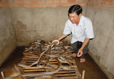 Kết quả hình ảnh cho cần thơ nuôi rắn ri