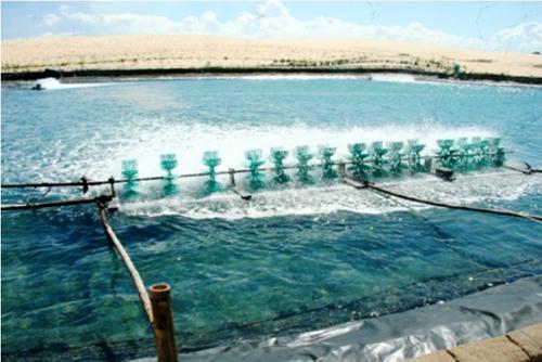 Các biện pháp khắc phục hậu quả sau bão đối với nuôi trồng thủy sản
