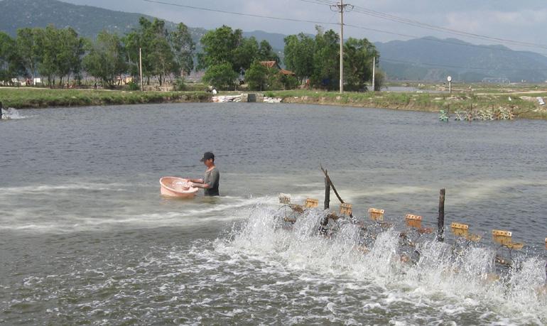 Phú Yên: Khuyến cáo không thả tôm nuôi vụ 3