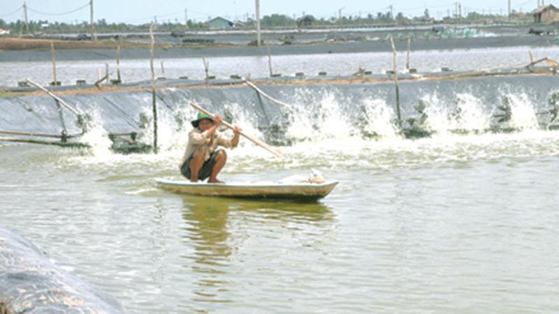 Tầm quan trọng và các giải pháp phòng bệnh trong nuôi tôm nước lợ