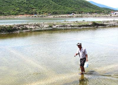 Trúng đậm vụ tôm nuôi trên ruộng muối