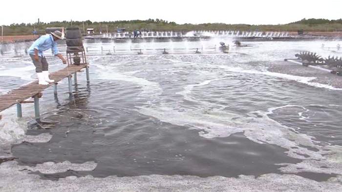 Vĩnh Châu: Ngành thủy sản khởi sắc