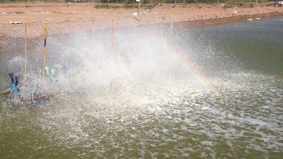 Xử lý khí độc Nitrit trong ao nuôi tôm