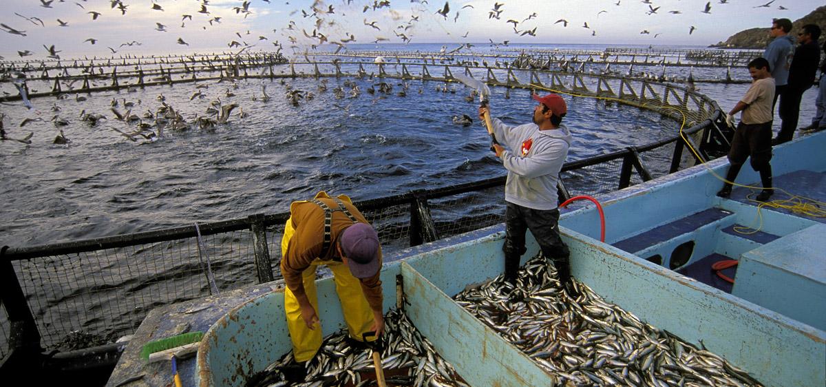 Thế giới cần sản xuất thêm 40 triệu tấn hải sản trong tương lai
