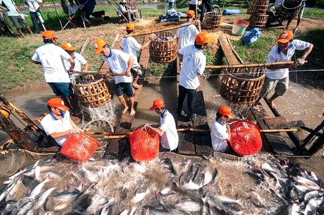 Ðồng bằng sông Cửu Long hướng đến nền nông nghiệp hữu cơ