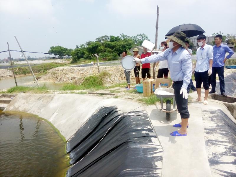 Quảng Ninh: Tổ chức tiêu huỷ 40,09 ha tôm nuôi bị dịch bệnh