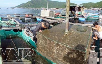 Phát triển bền vững nghề nuôi tôm hùm từ việc quy hoạch vùng nuôi