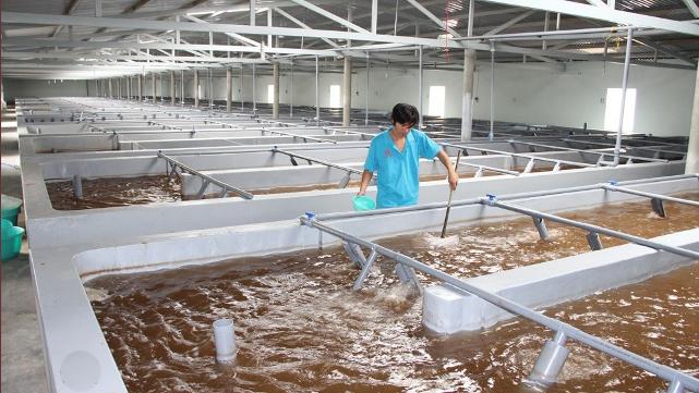 Ngăn ngừa ô nhiễm trong các cơ sở sản xuất tôm giống