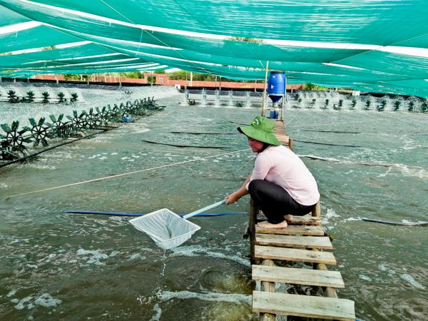 Từ lớn sang nhỏ - bước tiến mới của ngành tôm