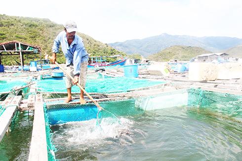 Sử dụng thức ăn tươi trong nuôi trồng thủy sản: Những hệ lụy