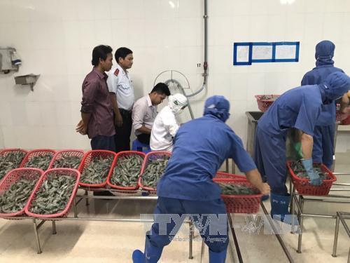 Tập trung thanh tra sản xuất phân bón, bơm chích tạp chất vào tôm