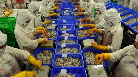 Nhà xuất khẩu tôm Ấn Độ : EU sẽ không thực hiện lệnh cấm
