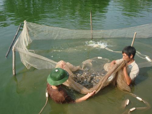 thu hoạch thủy sản