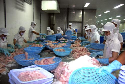 Cá tra Việt 'vô danh' thế giới: Kiểm soát từ ao nuôi, liệu còn kịp?