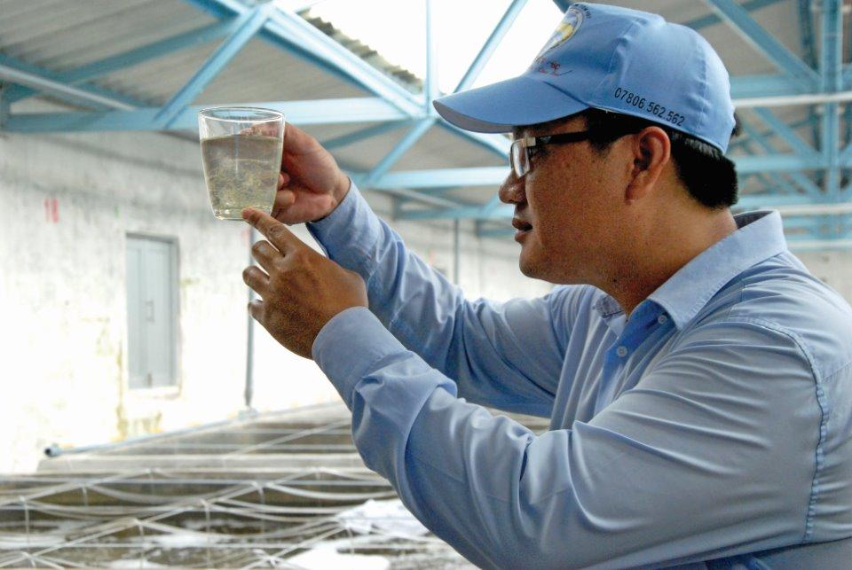 Mở rộng liên kết giúp nghề nuôi tôm phát triển bền vững