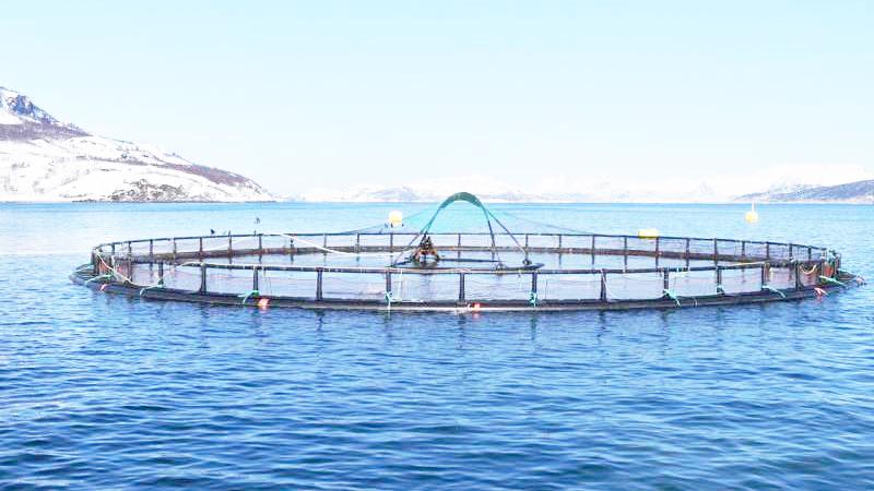 Phương pháp mới phát hiện nhanh tác động trại cá đến môi trường