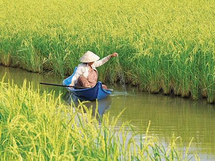 Vụ lúa trên đất nuôi tôm thành công